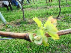 winebr0511
